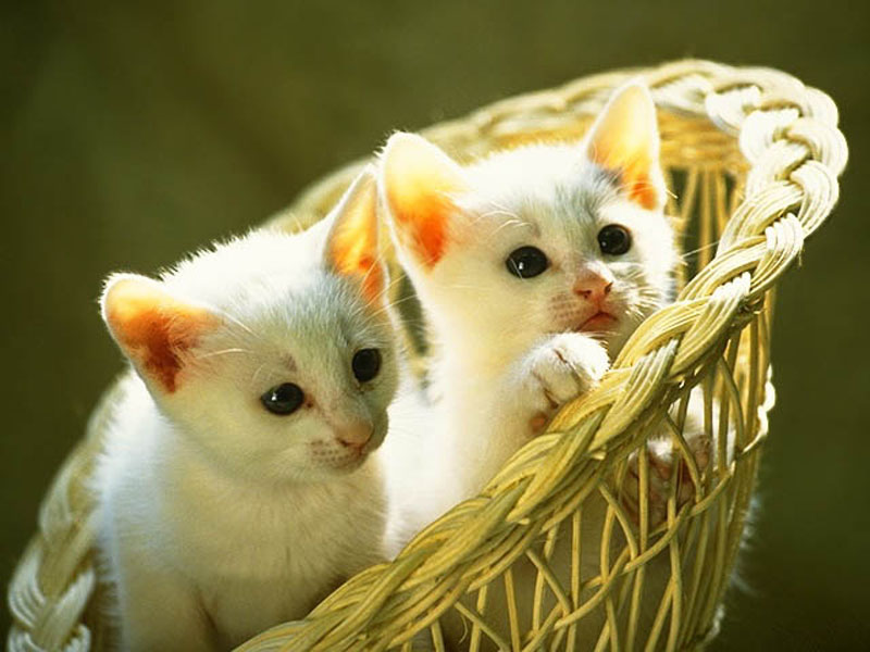 صور قطط جميلة 24_101055_1166549665