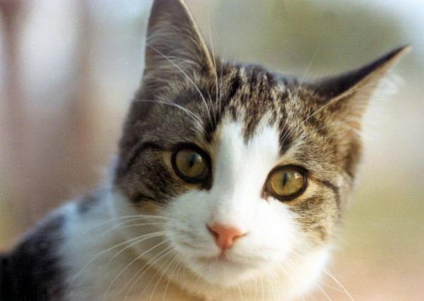 صور قطط جميلة 24_17618_1184152838.