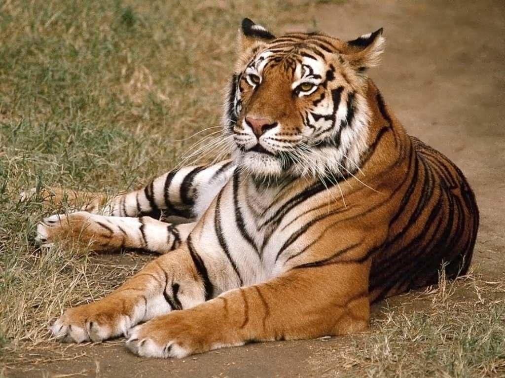 حيوانات مفترسة 25_17618_1158336060.jpg