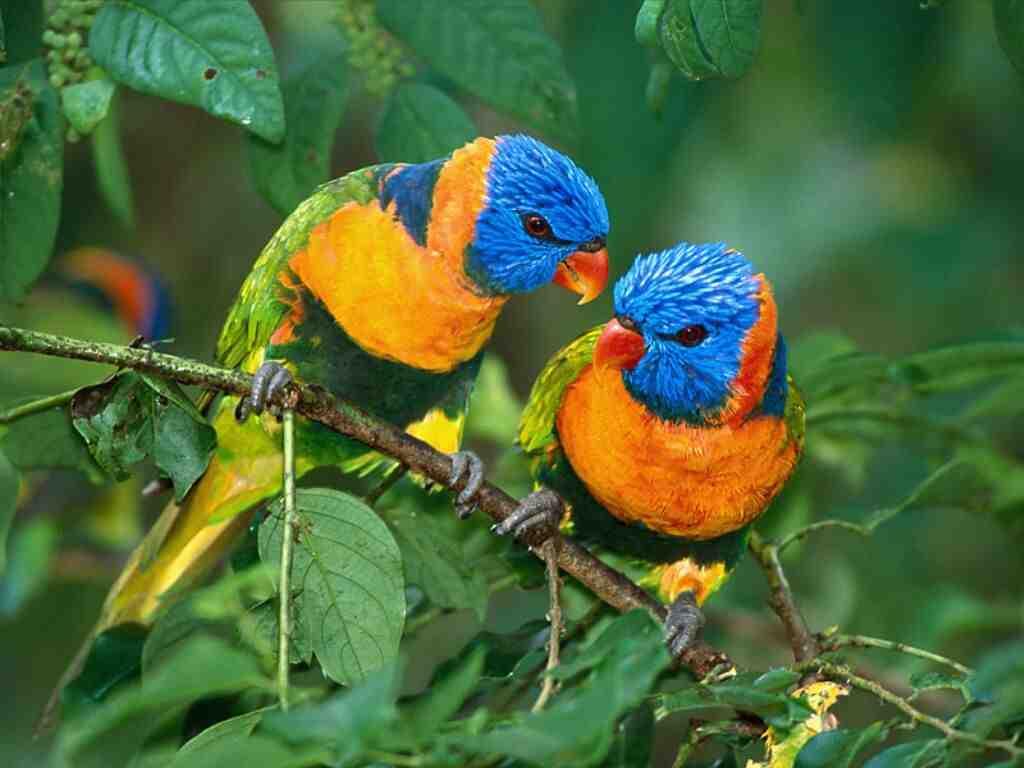 Pics of lovebirds kissing