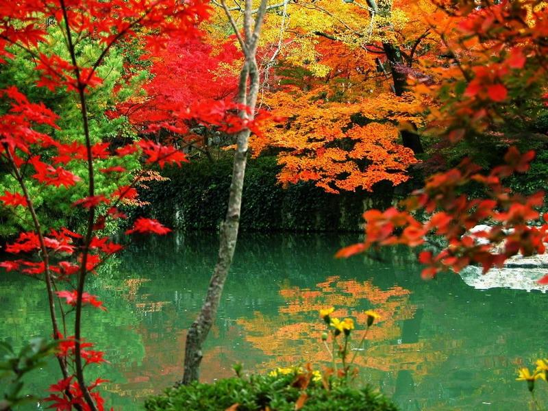 صور حدائق -حدائق صور -بالصور -صور حديقة