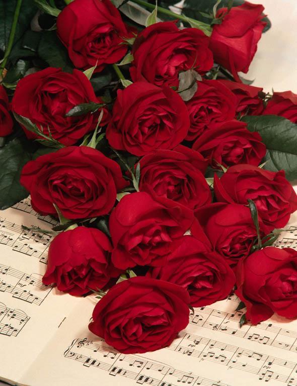 صور رومانسية احلى ورود وشموع رومانسية 41_101055_1163103125