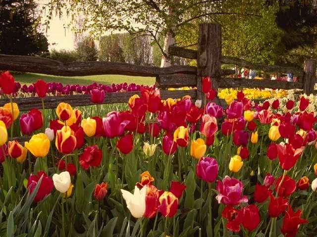 حدائق خلابة تريح النفوس 41_17618_1121163677.