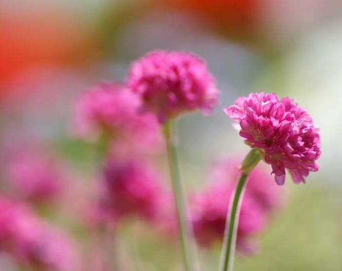 أجمل الورود والزهور بالعالم