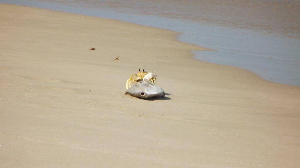 شاطئ السيفة Size:24.30 Kb Dim: 1024 x 576