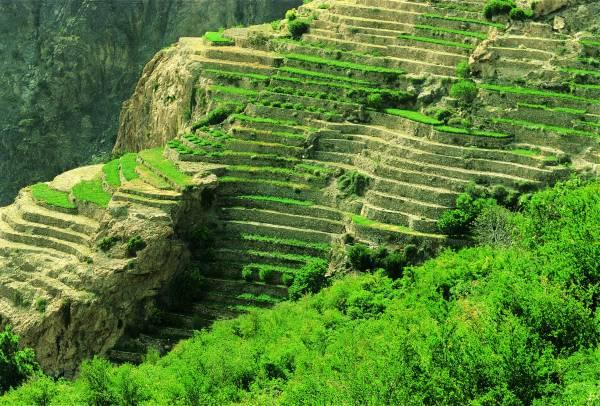 الجبل الأخضر Size:74.10 Kb Dim: 600 x 406