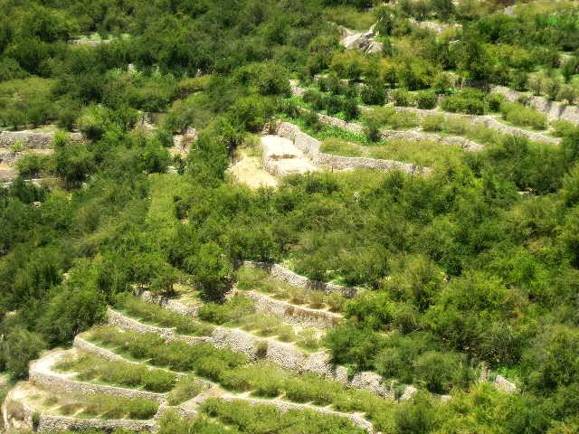 الجبل الأخضر Size:82.40 Kb Dim: 640 x 480