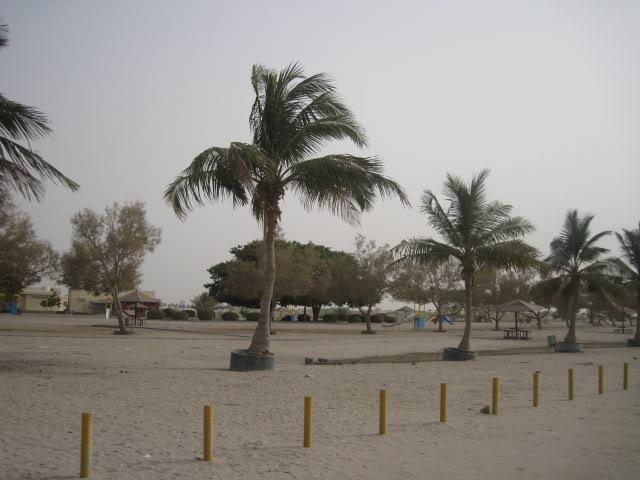 شاطئ السوادي Size:49.10 Kb Dim: 640 x 480