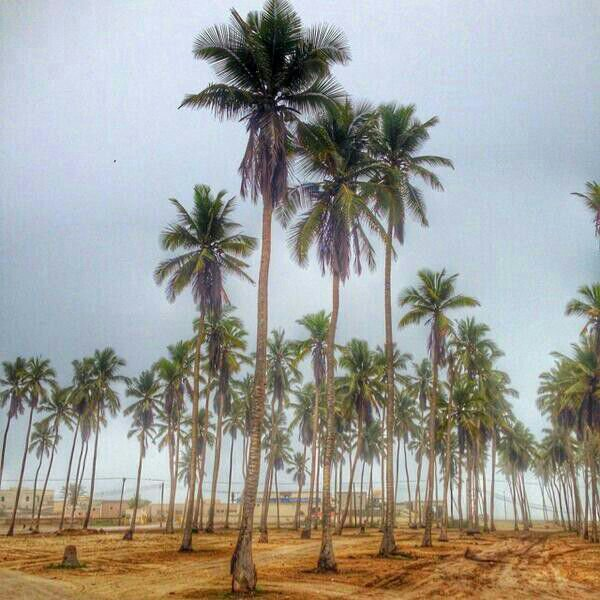 شاطئ الحافة Size:77.60 Kb Dim: 600 x 600