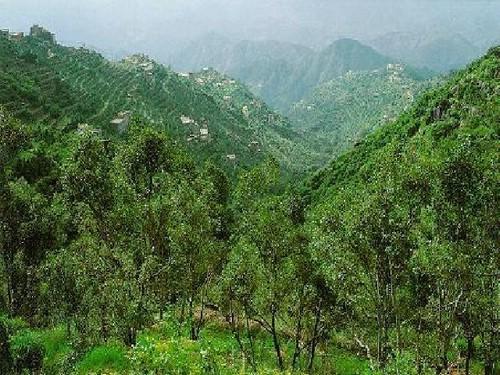 جبال عسير والطبيعه الخلابه 5_3143_1060180171.jpg
